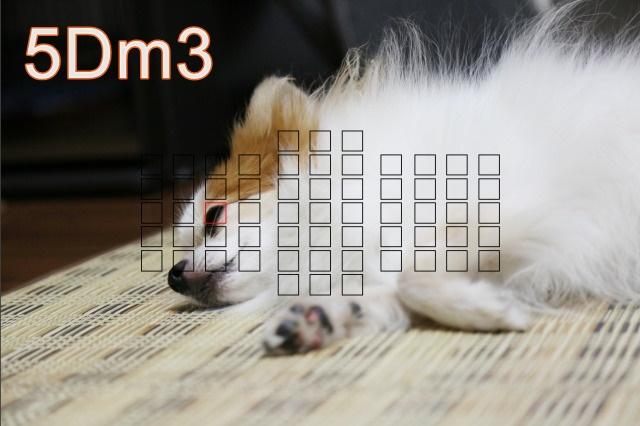 5D m3