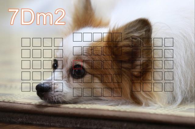 7D m2