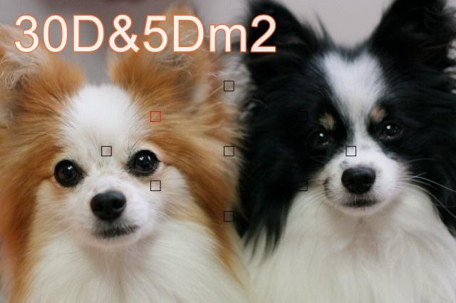 30D.jpg