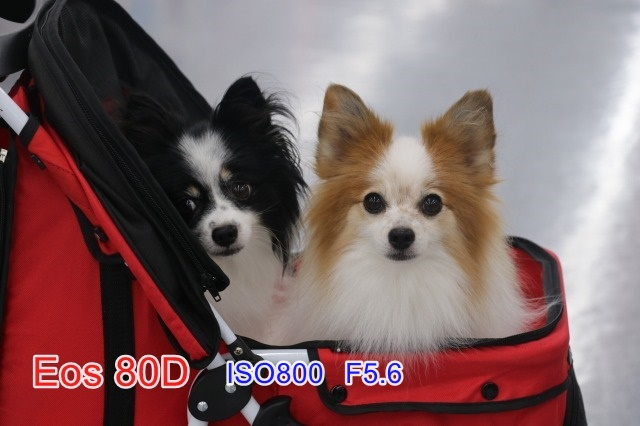 o_eos80d.jpg