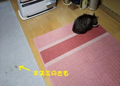 16gc11.jpg