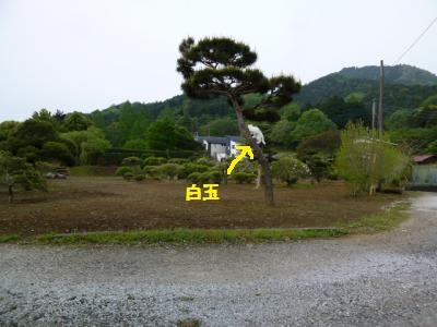 16kb7.jpg