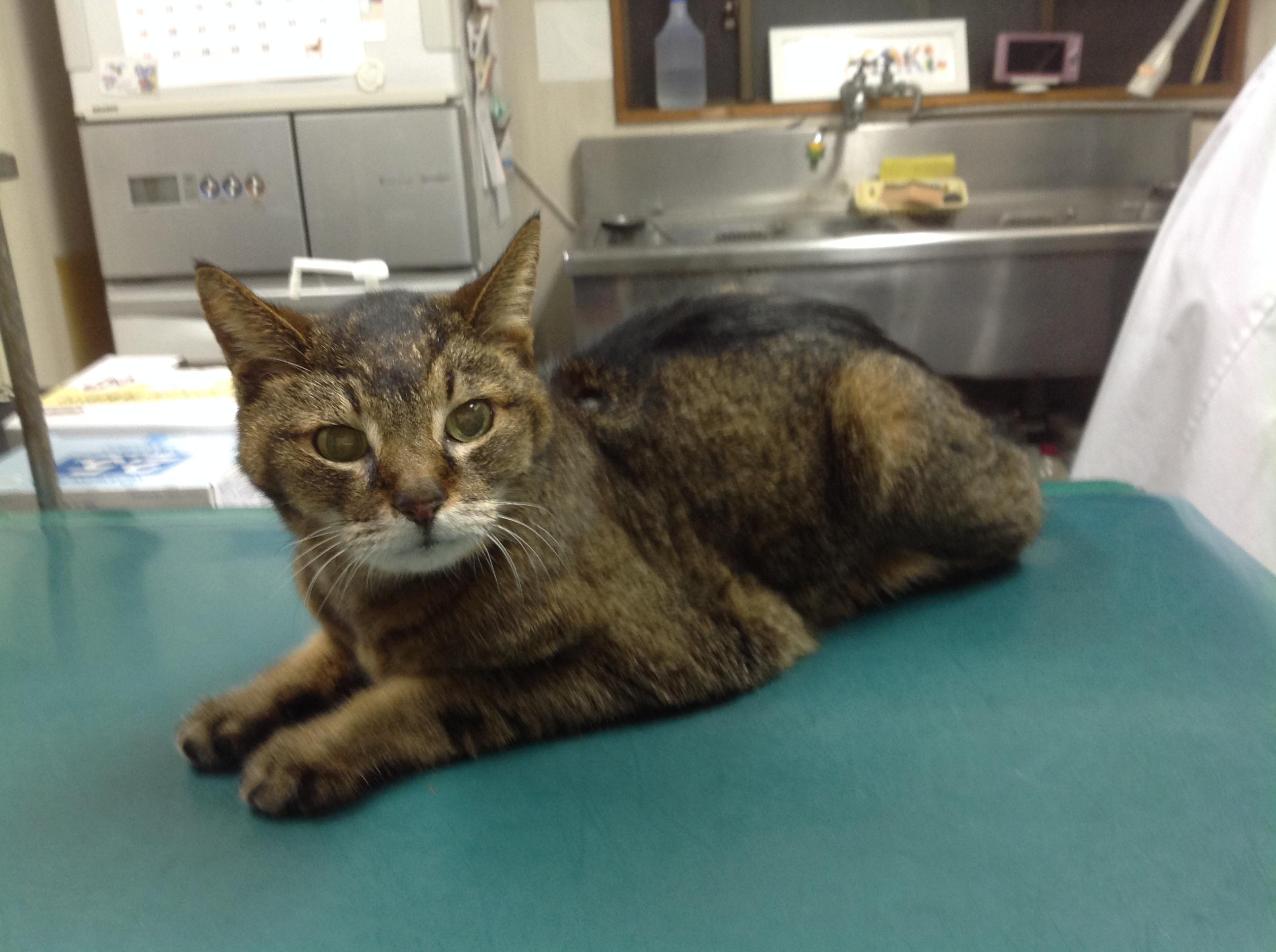 迷子猫の入院