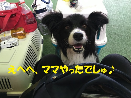 030_20160517002018fc1.jpg