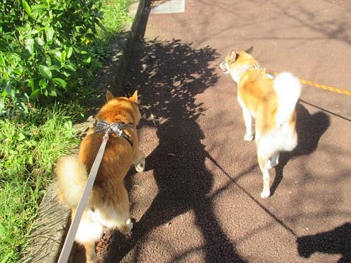 3一緒に歩こ