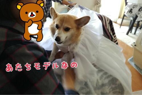 fc2blog_2016110622042116e.jpg