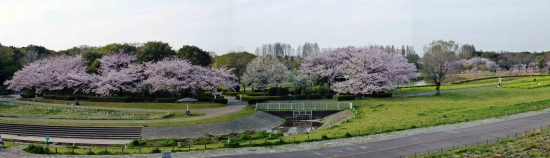 00-panorama 庄内緑地 02