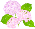 ajisai-20130603-ic1[1]