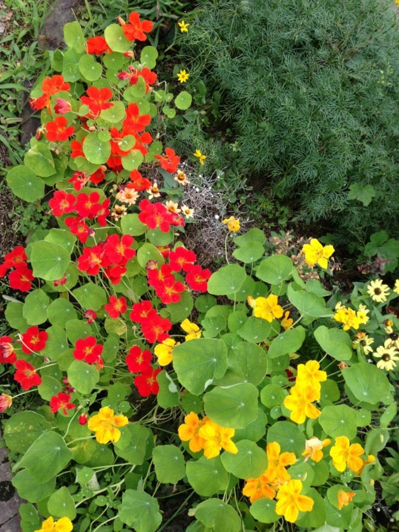 赤・黄色花