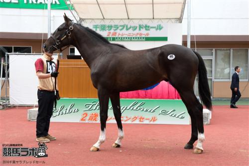 【競馬】ダンスパートナーの最後の産駒・ベストダンスが武豊騎手でデビュー!