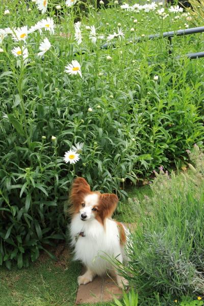 5月の犬@写真部 with Kinako