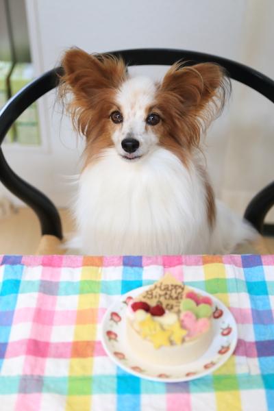 きなこ10才の誕生日ケーキ&撮影