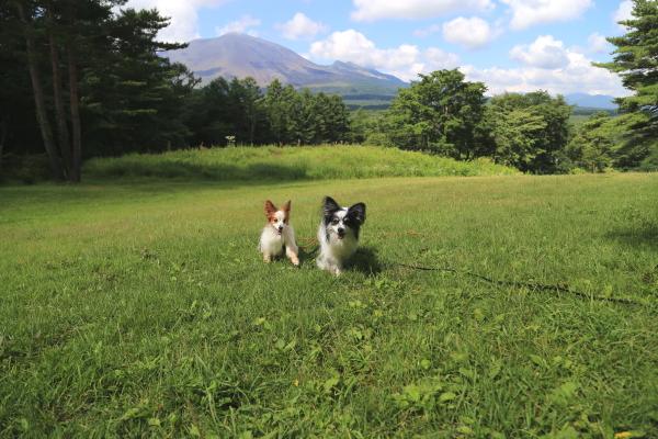 夏の軽井沢旅行(後半)2016
