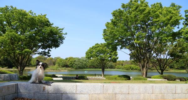 昭和記念公園 2016 with イチロー