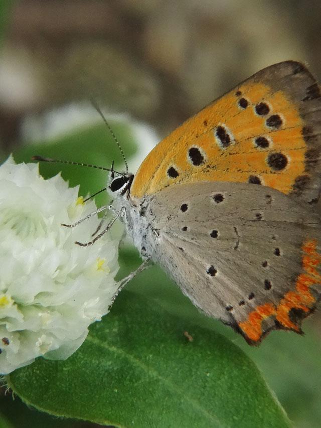 マクロ蝶2