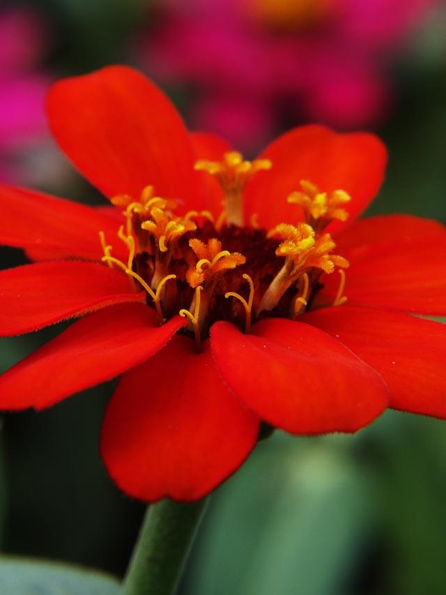 Flower-in-Flower.jpg