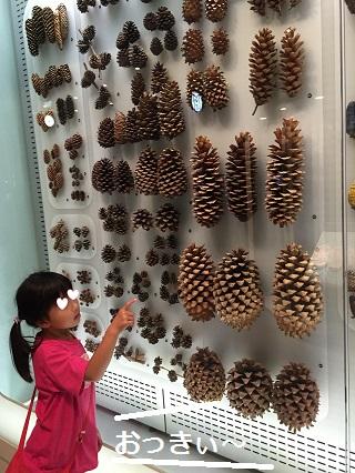 国立科学博物館松ぼっくり