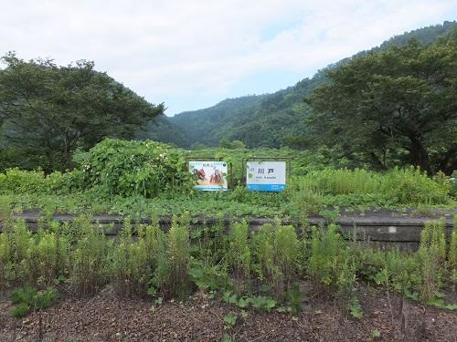 kawado (11)