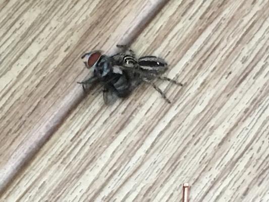 蜘蛛IMG_0001