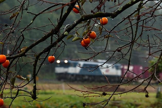 柿は雨の日こそ絵になる