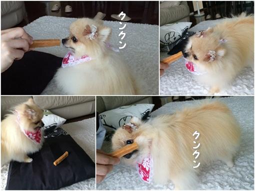 cats1_201610021552355ae.jpg