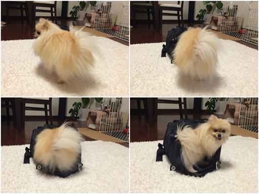 cats_20160922221237603.jpg