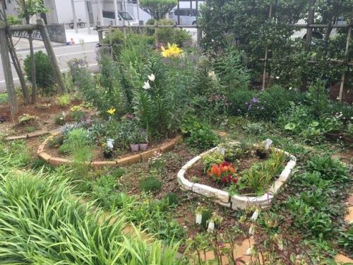 2016-06-30サトウ庭