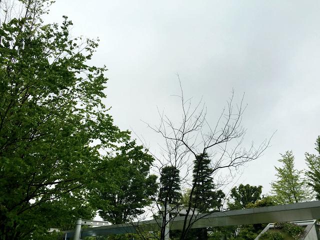 どんより曇る2016年5月26日の東京2 by占いとか魔術とか所蔵画像