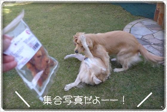 2016,11,8お庭遊び12