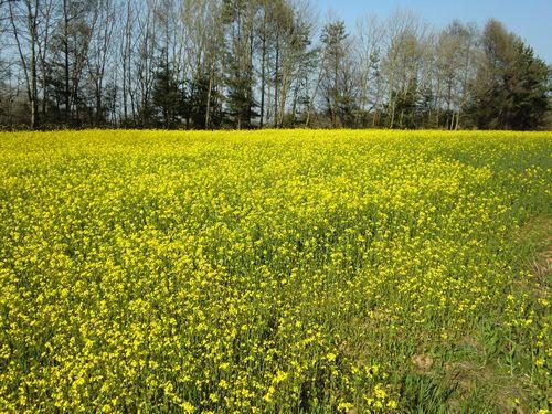 004春の風景