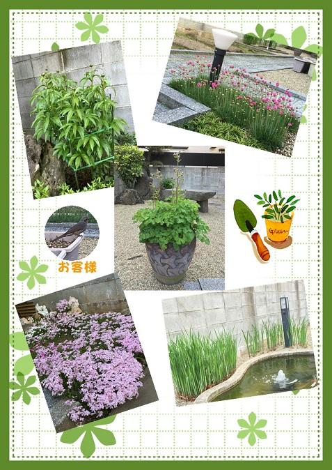 5月の庭 60