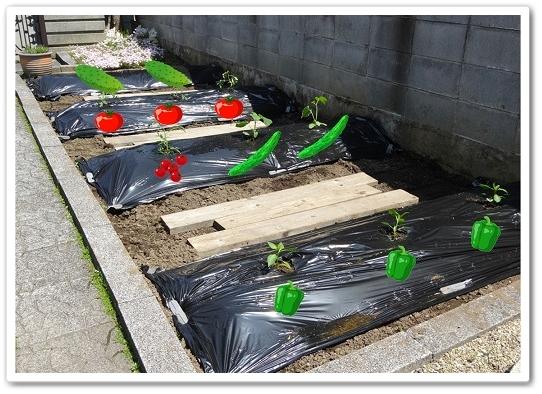 野菜を植えた 45