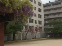 藤棚&八重桜♪