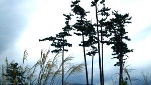 赤城山の景色秋
