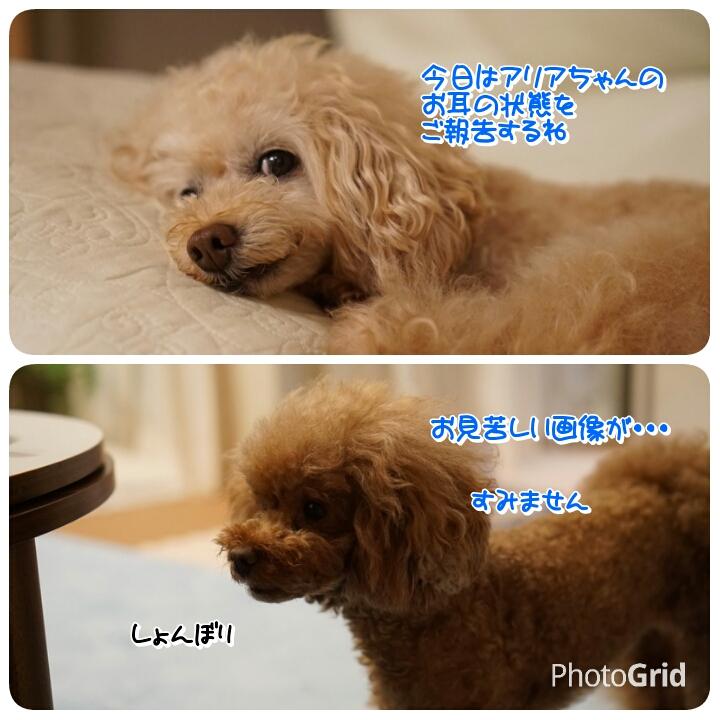 201607021309258cf.jpg