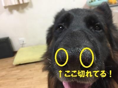 201611039.jpg