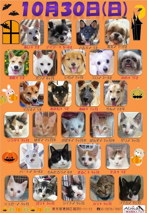 ALMA ティアハイム 10月30日 参加犬猫一覧