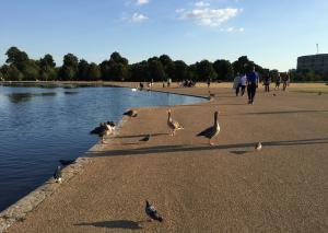 ケンジントンパレスの鳥たち