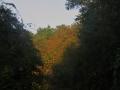 深緑の間の紅葉