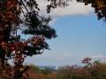 大学の蔦と桜