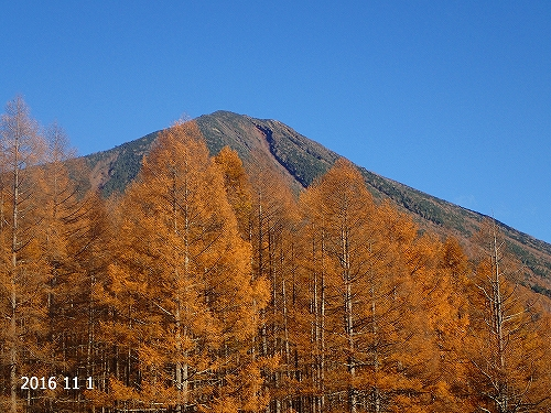 s-男体山とカラマツ20161101