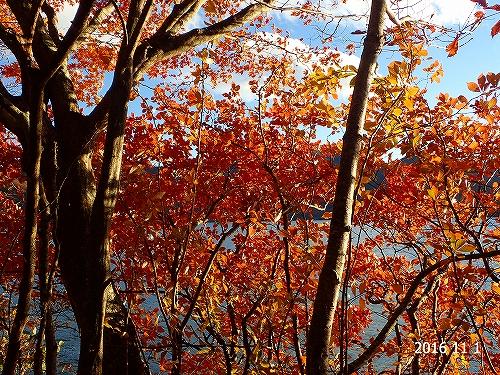 s-中善寺湖畔⑤20161101