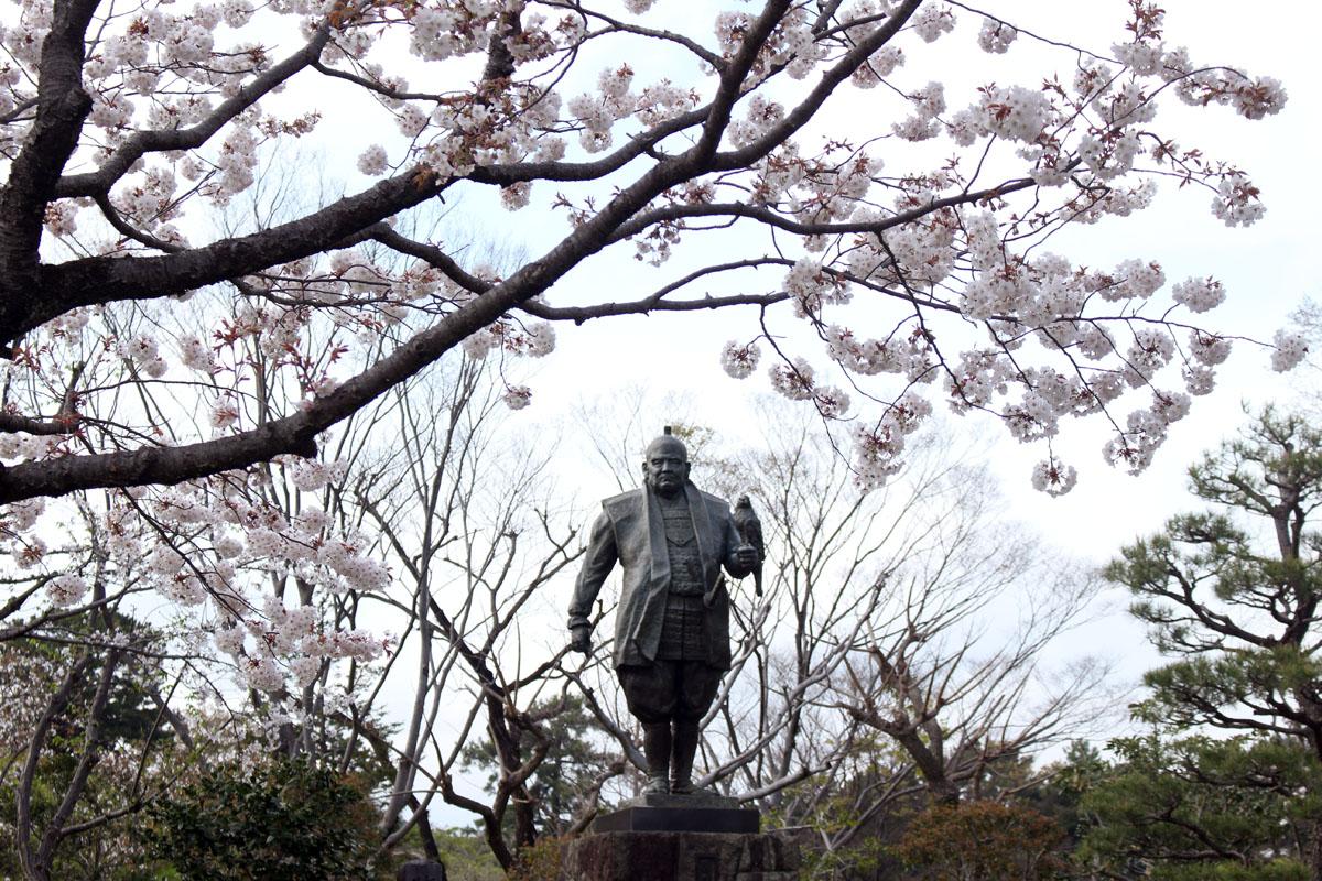 徳川家康公之像と桜 駿府城公園 160405
