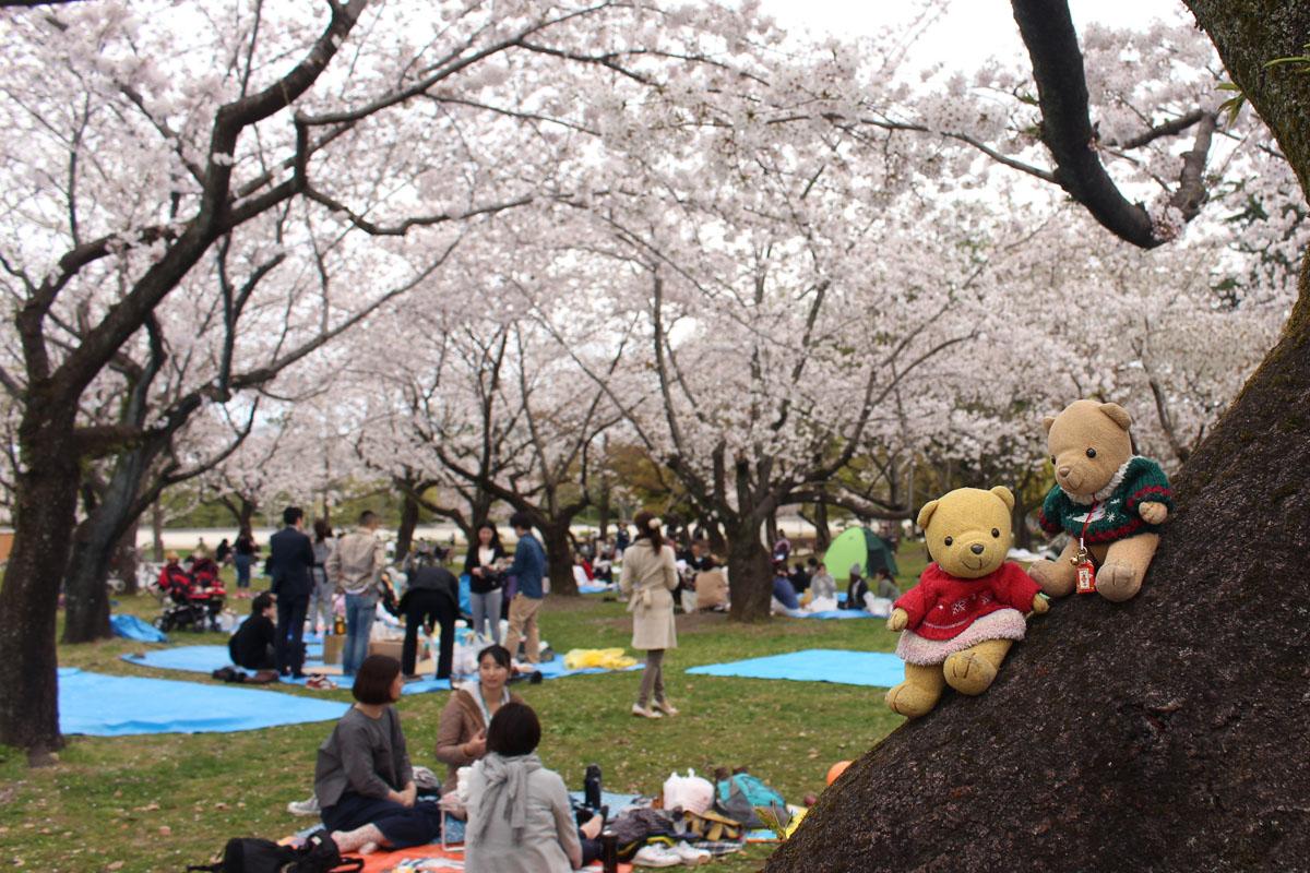 桜の幹で花見・駿府城公園 160406