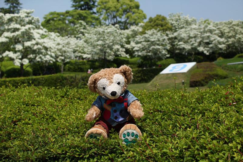 Duffy ヒトツバタゴを背景に 城北公園 160501