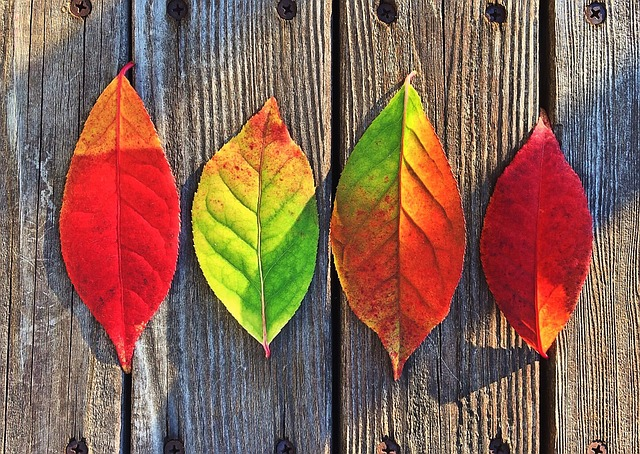 leaves-1051937_640.jpg