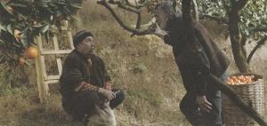 みかんの木の下で語らう老人