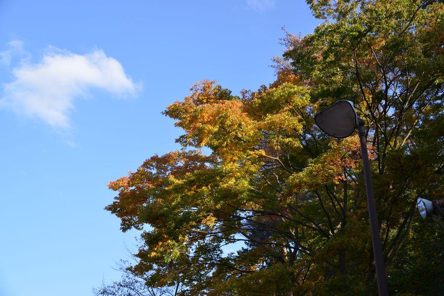 秋晴れ-4
