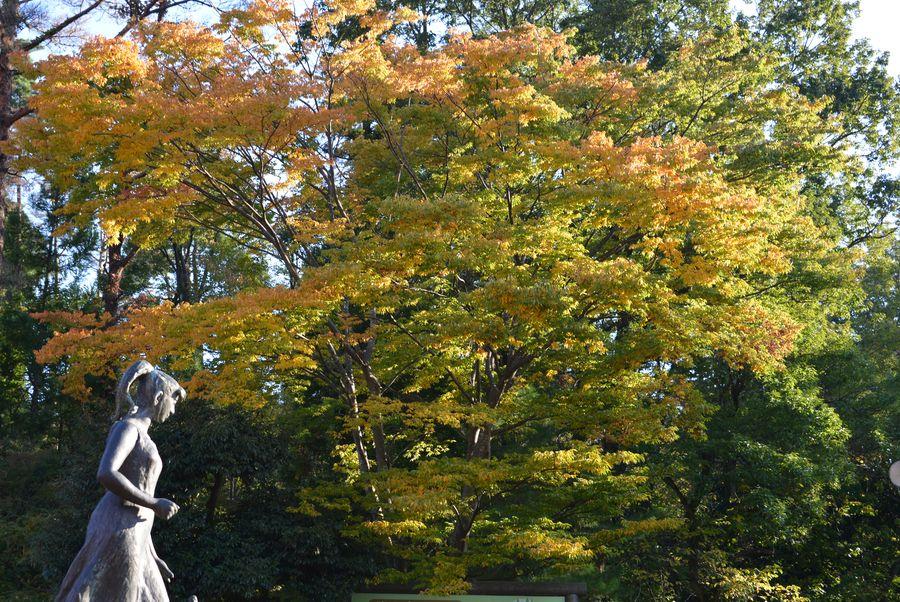 秋晴れ-5