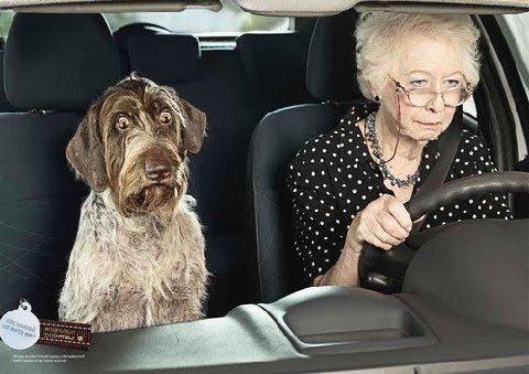 認知症・運転